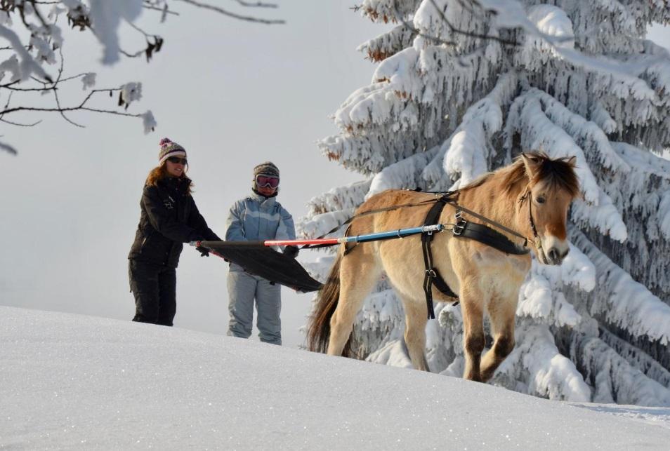Pratiquer le ski joëring